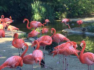 As pink as Flamingo