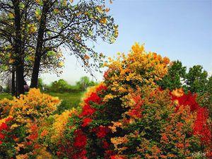 Landscape- Gabriel Kasumu
