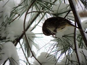 bird in the pines