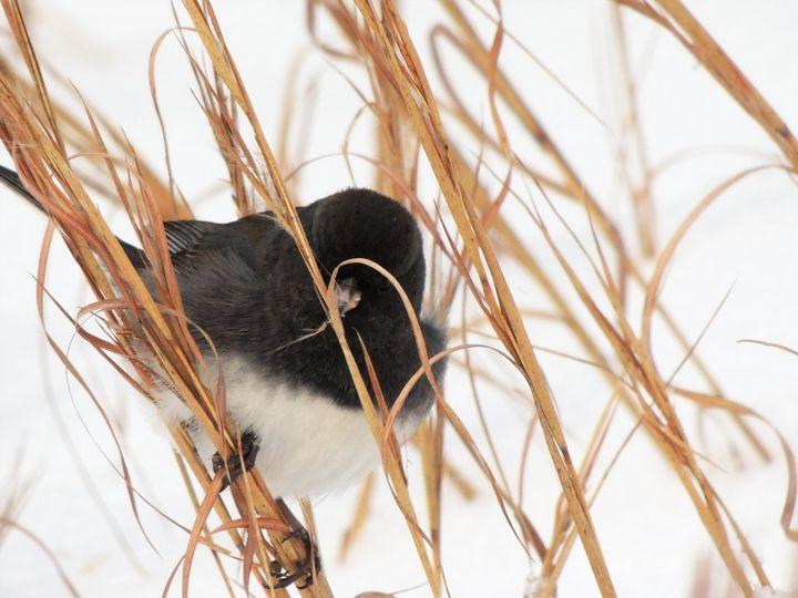 Bird in a Field - Maria Popescu