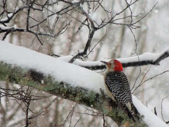 Woodpecker - Maria Popescu