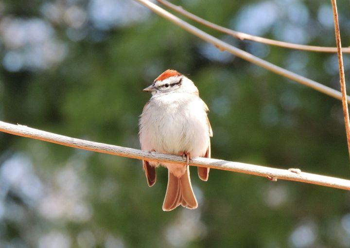 Bird in the Spring - Maria Popescu