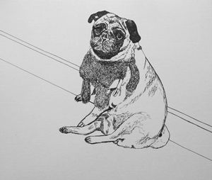 Pug by the Wall