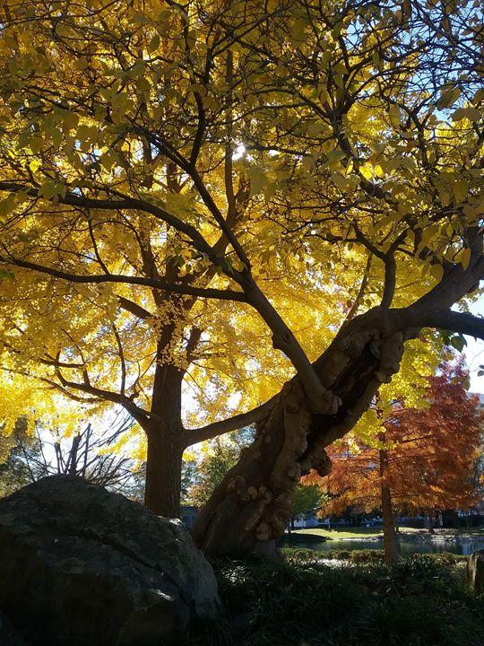 Autumn Obssesion - FOREVER LIFE