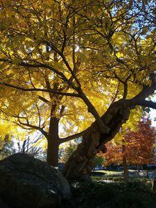 Autumn Obssesion