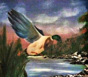 Duck Over Water