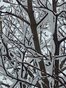 Snow Limbs