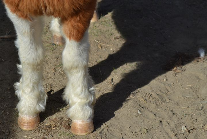 Feets. - Sorcha
