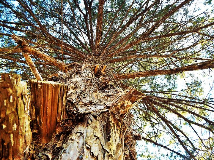 Tree Shot - Angel