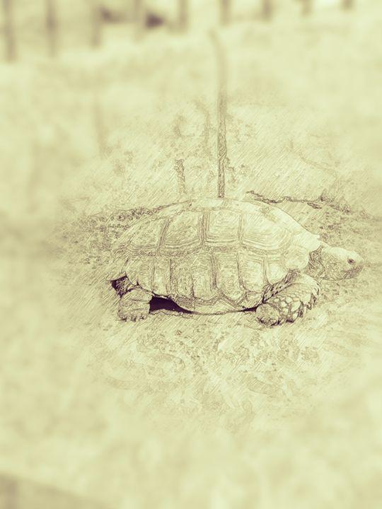The Tortoise - Amatuer Artist