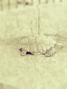 The Tortoise - Amatuer Artist