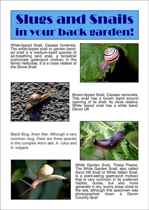 Slugs and Snails - BryanWB