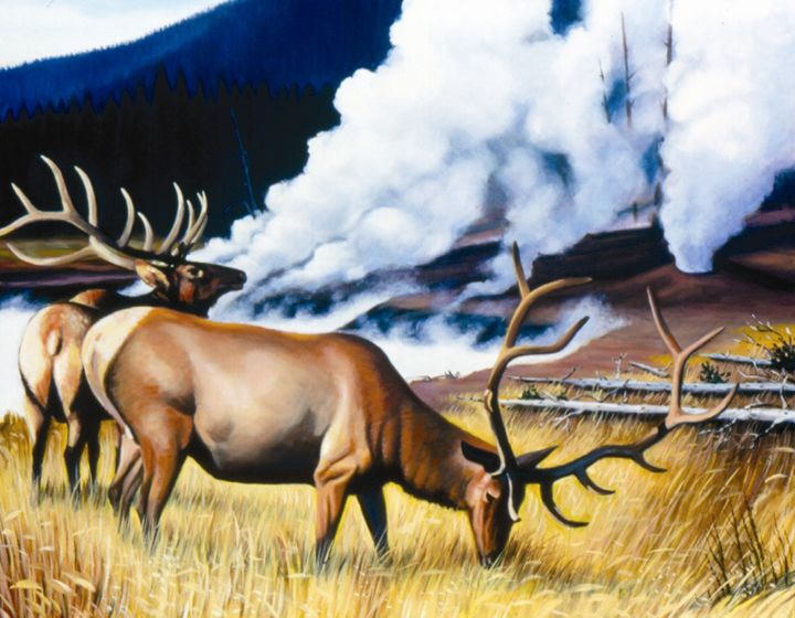 Yellowstone Elk - philhopkinsfineart