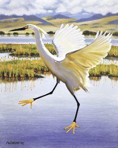 Snowy Egret - philhopkinsfineart