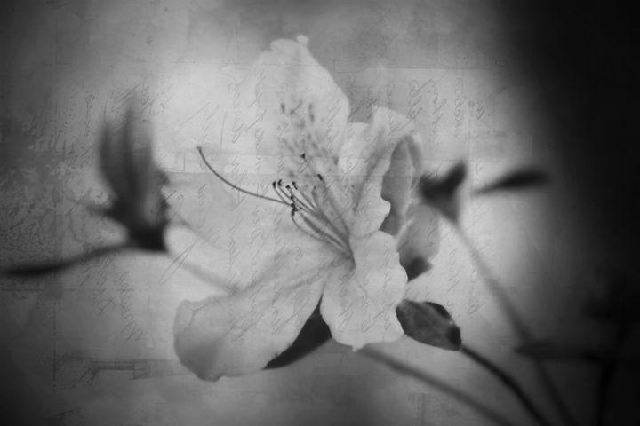 Flower art - Jennifer Swinner Photography