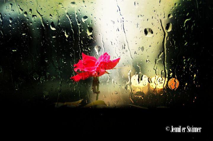 Single Rose - Jennifer Swinner Photography