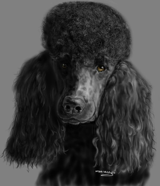 Black poodle - myke irving