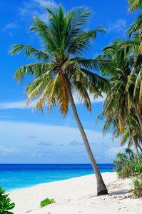 Coastal Blue Beach