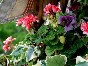 Beautiful Flowers on the Balcony