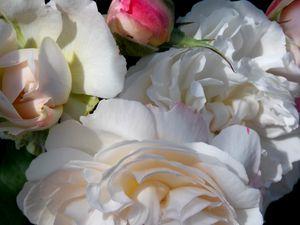 White Rose Bouquet  Close up