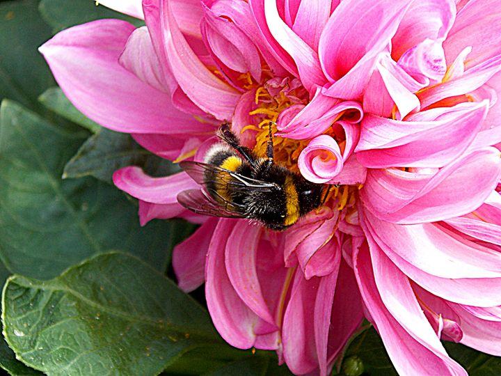 Bumblebee - BranaghBel Art