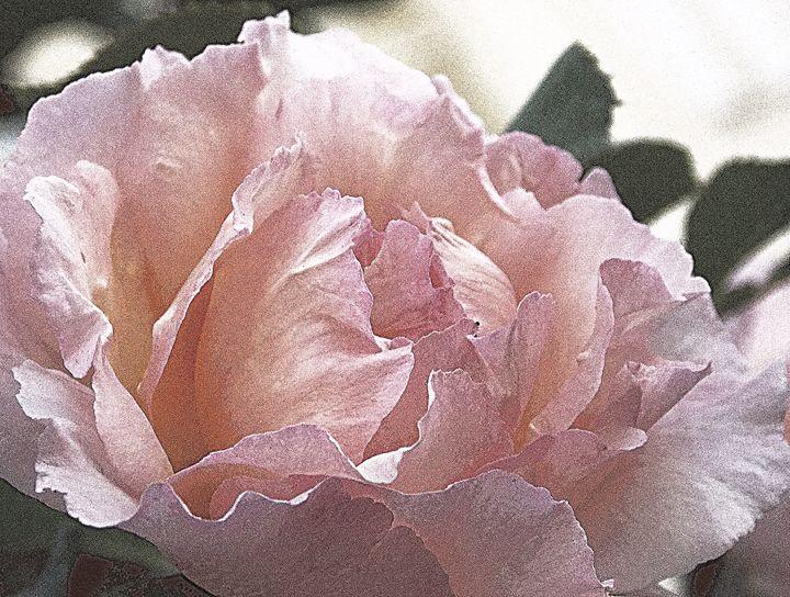 Pink Rose Vintage Picture - BranaghBel Art