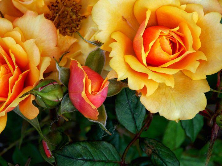 World of Roses - BranaghBel Art
