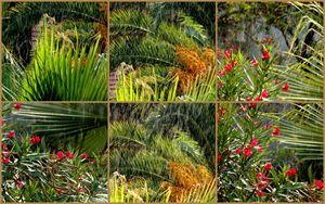 Summer Rain - Collage - dadaart