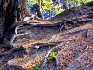 Don't Cut Roots !