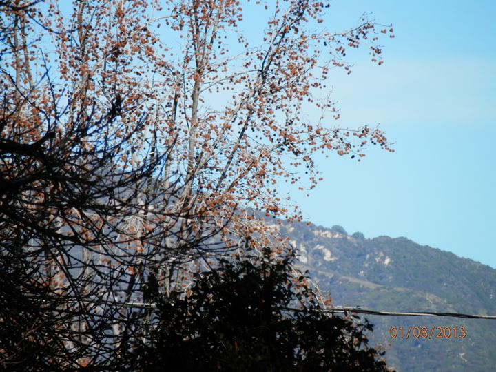 trees mountain in background - Kate-Ann Art & Photography: Kathy and Stephanie Pe