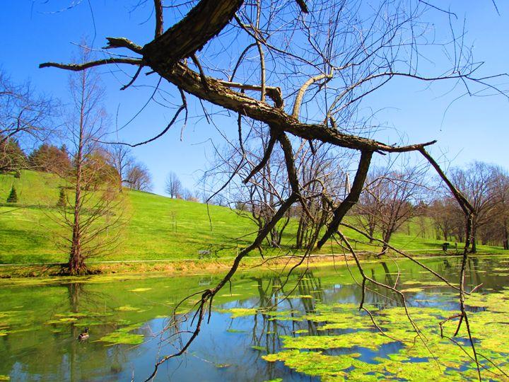 Swamp Water - Ivys Dreamer