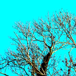 Trees at White Bay, Isle of Cumbrae