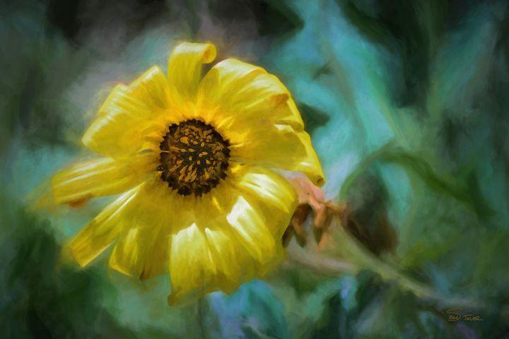 """""""Here Comes the Sun"""" - Version 2 - Sean Toler Photo"""