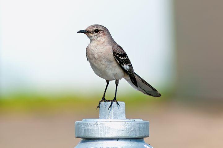 Fire Bird - Sean Toler Photo
