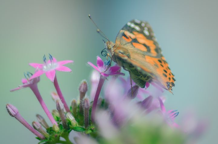 Springtime Nectar - Sean Toler Photo