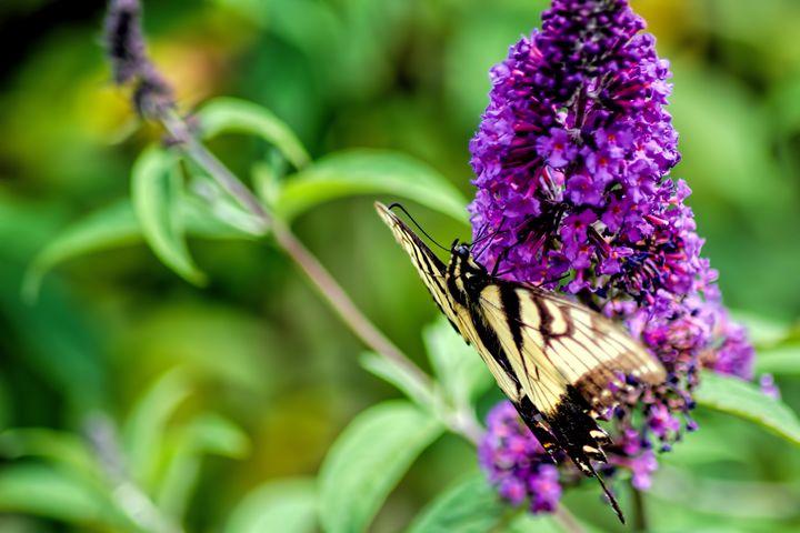 Butterfly Shot 2 - Sean Toler Photo