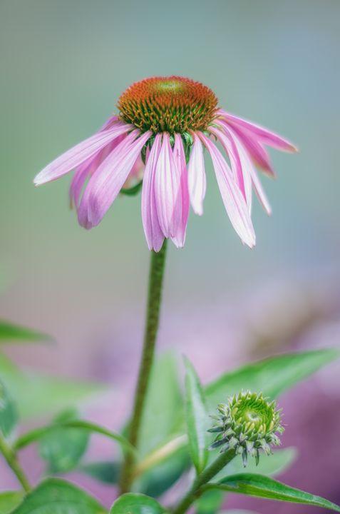 Brookside Bloom - Sean Toler Photo