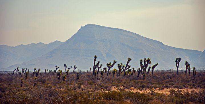 Mexican desert - Elisa Gianola Fornari