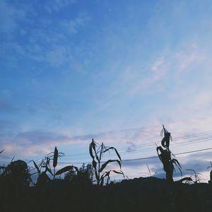 Above the corn field