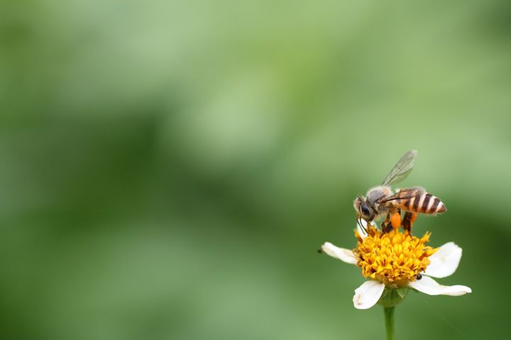 A Hard Working Bee - Beloved Gallery