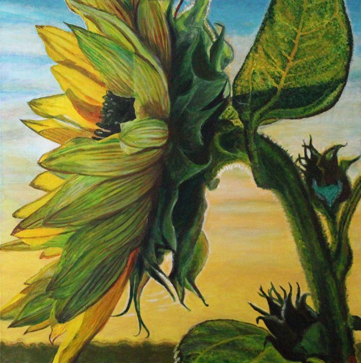Sunset Sunflower - Brandonorbanoskyart.com