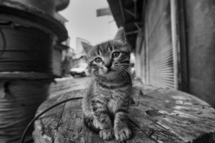 Kitty - People