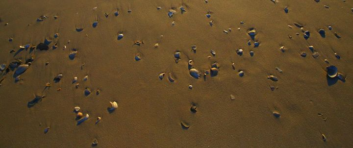 Fish Eye of Shells - Adi Starr