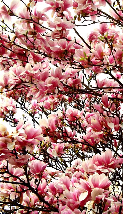 Full Blossom - Adi Starr
