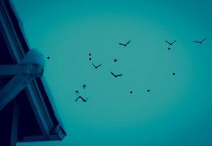Birds #5