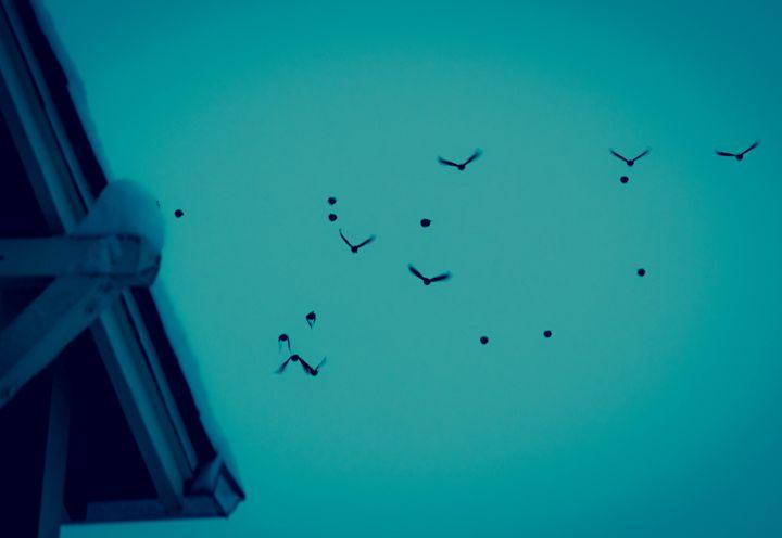 Birds #5 - J.Lynn