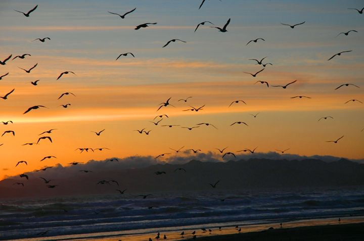 Sunset Rush Hour - Artifact Claws