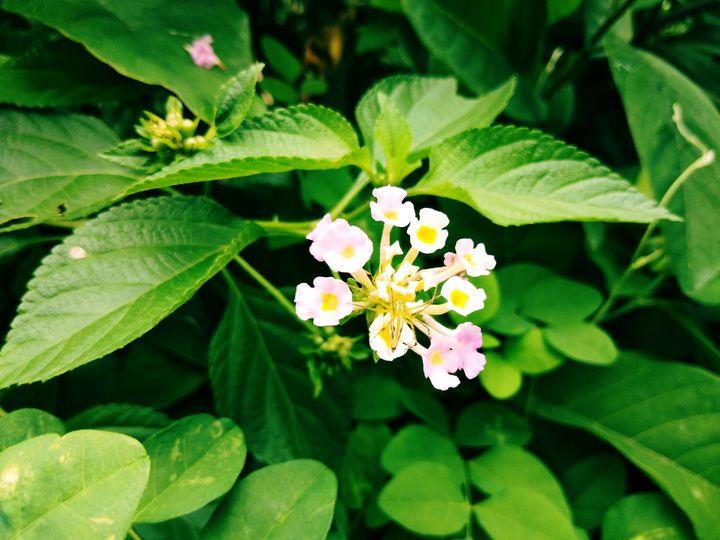Flower - PAINTER RAJ
