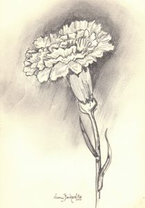 Carnation Drawing -  Sabschool