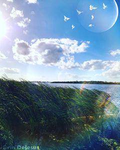 Everglades Heaven